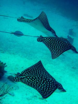 Snorkeling on Grace Bay MyTurksAndCaicosBlogcom
