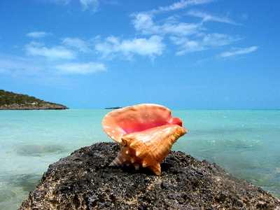 The beautiful pink shell of a Queen conch is often crafted into decorative pieces