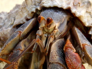 Hermit Crab up close and personal!