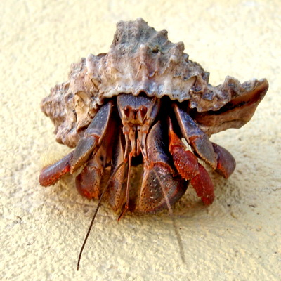 More Hermit Crabs? But this one today was soooooo neat!