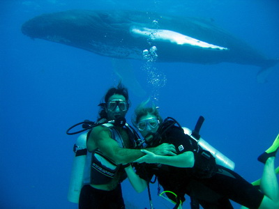 Mickey and Jayne of Flamingo Divers spent asome time up close and personal with a Humpbacked Whale on a recent dive trip.