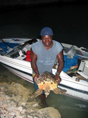 A local fisherman with comes in with his catch of lobster and this turtle