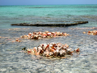 Low tide had exposed the piles of conch shells lying in the waters