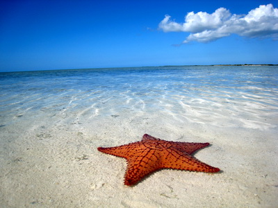 A starfish or Cushion Star in the shallows at Bonefish Point