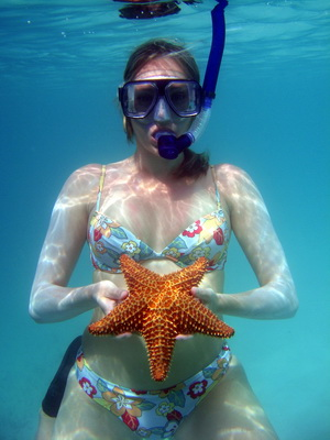 The brightly orange coloured cushion star has a hard shell with raised knobby spines