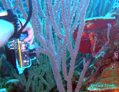 Brian got a great photo of Jayne's camera shooting the little seahorse