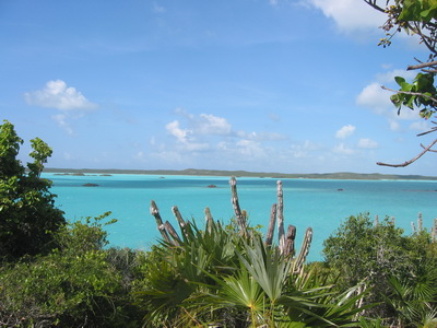 An Old Man Cactus stands tall against the panoramic blue turquoise background of Chalk Sound