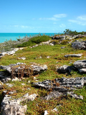 Sea Purslane carpets the rocks on this little cay