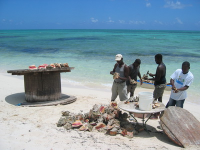 Conch assembly line on the beach in Blue Hills