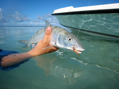 Bonefishing is GREAT in the Turks and Caicos Islands