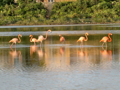 The flamingos were different colours some a real vivid pink.