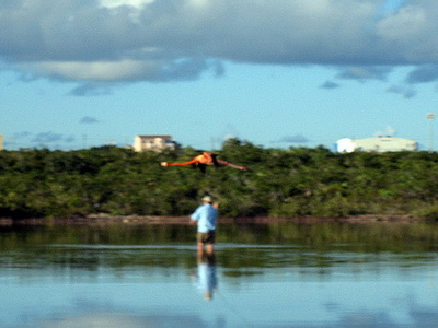 Here's Tim bonefishing with a flamingo flying overhead.