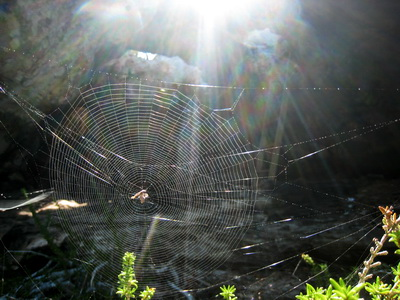 Beautiful spider's web catches the light at the pirate's cave at Osprey Rock.