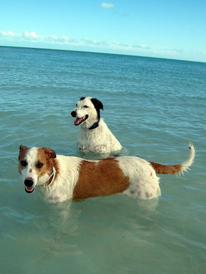 These two potcakes had a great time splashing, romping and just sitting in the water.