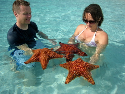 Three beautiful Cushion Starfish