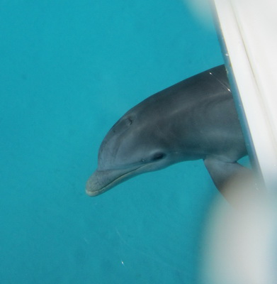 A great smile and close up of the dolphin.