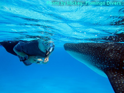 Face to face with the gentle giant of the seas.