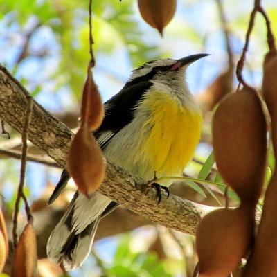 birdbananaIMG_9988
