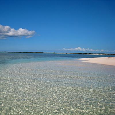 beachboneIMG_7330