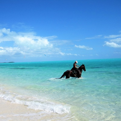 Provo Ponies is ready to take you for a leisurely ride on Long Bay beach